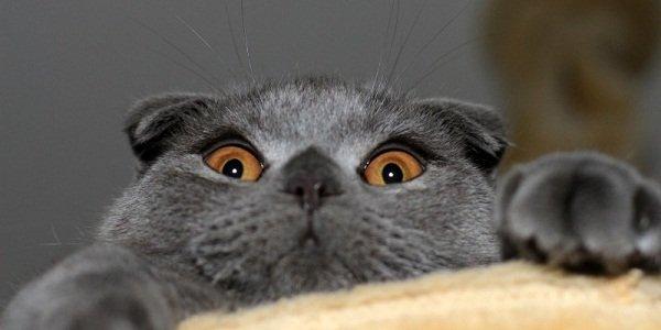 Продажи котов в Российской Федерации увеличились после обвала курса рубля