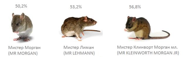 Крысиные торги: могут ли заработать трейдеры-грызуны